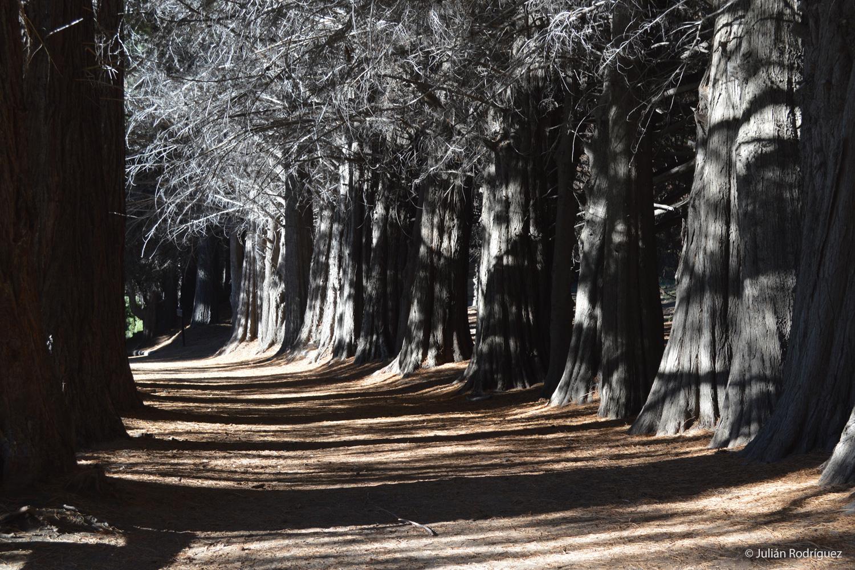 Bariloche argentina paseo fotografia colombia paisaje